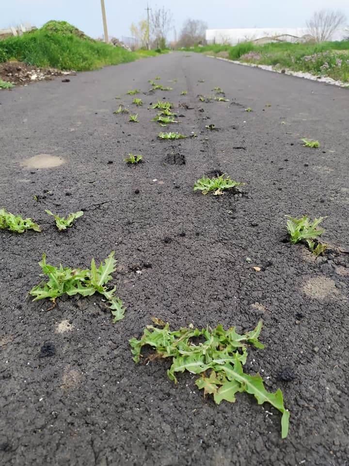 Під Нікополем на новій асфальтованій дорозі проросла трава. Фото